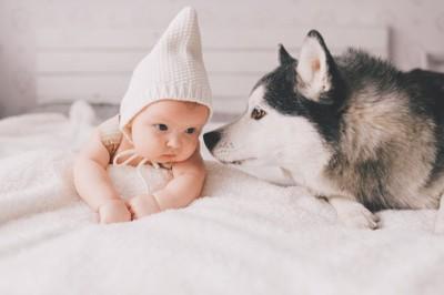 赤ちゃんを見守る犬