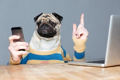 携帯を触る犬