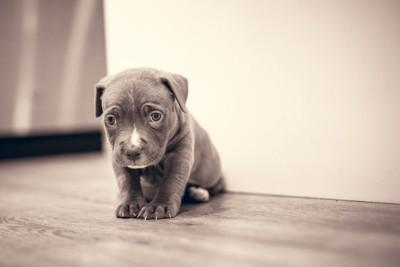 悲し気に佇む子犬