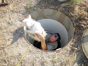 助け出される犬