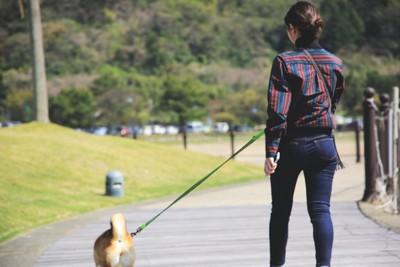 犬を散歩をさせる女性