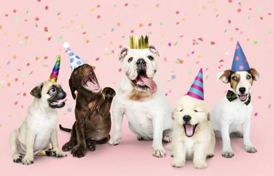 パーティーに参加する犬たち、ピンクの背景