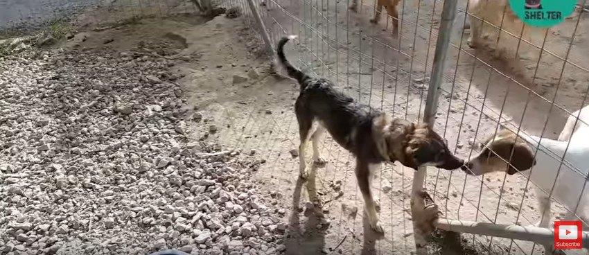 フェンス越しのあいさつ