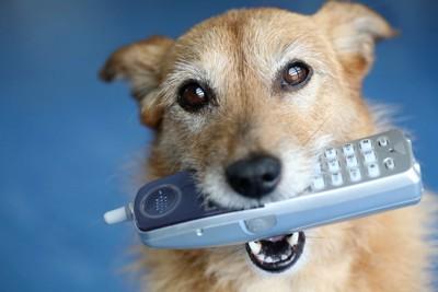 電話の子機を咥える犬