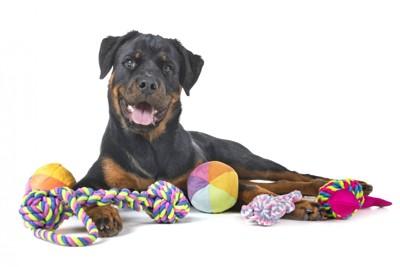 おもちゃに囲まれる犬