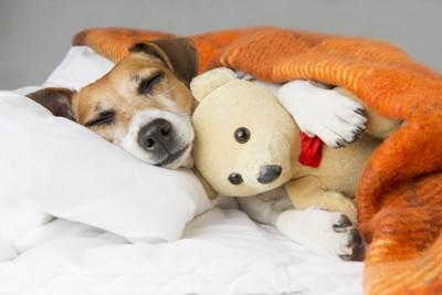 ぬいぐるみを抱いて寝る犬
