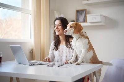 パソコンを使う女性と立ち上がって一緒に見る犬