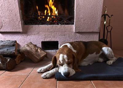 暖炉の前で温まる犬