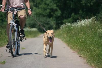 自転車に乗る男性と犬