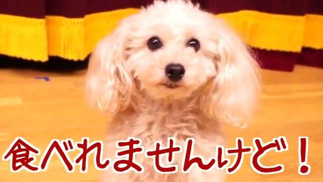 食べれませんけど!~字幕