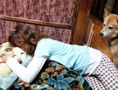 老犬を抱きしめて看取ってる姿を見ている犬