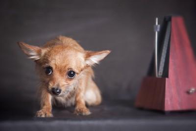怯えている犬
