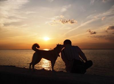 夕陽をバッグに飼い主と犬