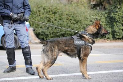 街を歩く警察犬