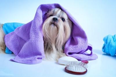 紫のタオルが被さった犬