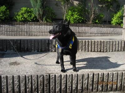 ヤンチャ時代の愛犬