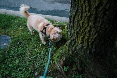 木の根元を嗅ぐ犬