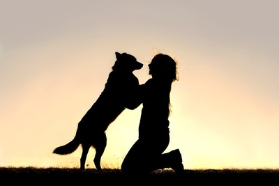 飼い主に飛びつく犬のシルエット