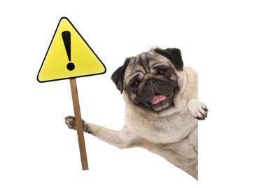 エクスクラメーションマークの看板を持った犬