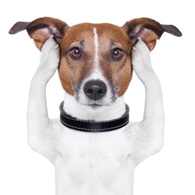 両手で耳を塞いでいる犬