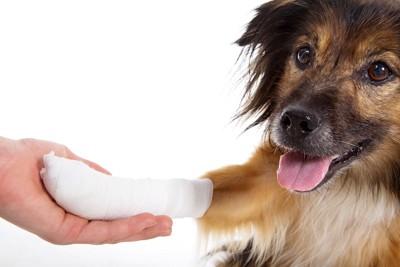 足に包帯をしている犬
