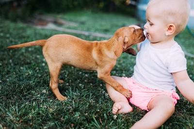 赤ちゃんの口元を舐める子犬