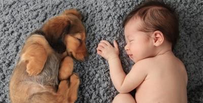 眠る子犬と赤ちゃん