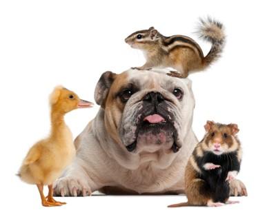 犬と小動物