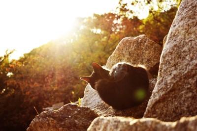 光の中の猫