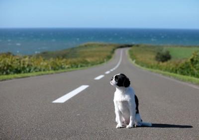 道路に座り込む犬