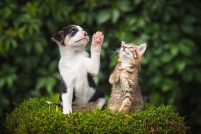 同じ仕草をする子犬と子猫
