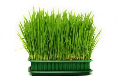 ペット用の草