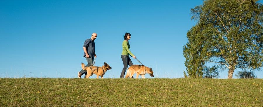 散歩をする人と犬