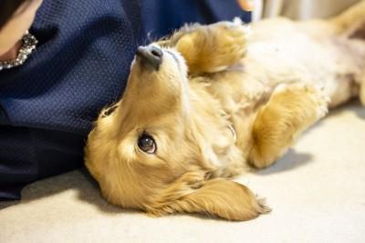飼い主の隣で仰向けになる犬