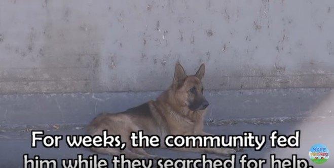 水路にいた犬