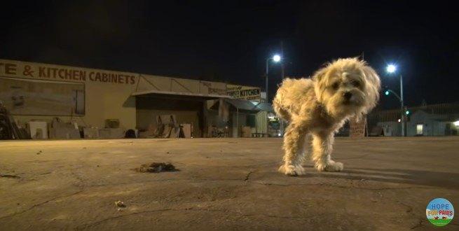 3本足で立つ犬