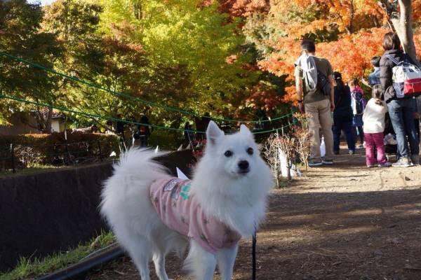 人通りの多い散策路に犬