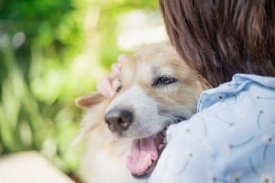 飼い主に抱き寄せられる犬