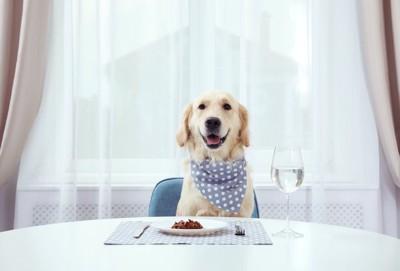食卓に座る水玉模様のバンダナをしたゴールデンレトリバー