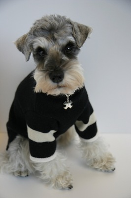 黒犬服を着たMシュナ