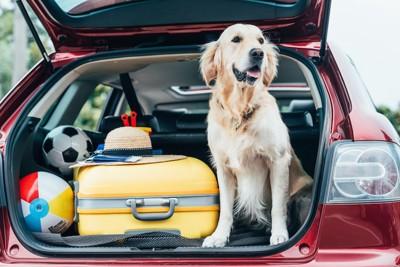 車のトランクに乗っている犬