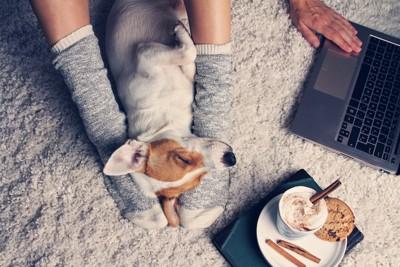 パソコン作業をする飼い主の足元で眠っている犬