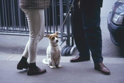 散歩中にお座りしている犬と話している人たち