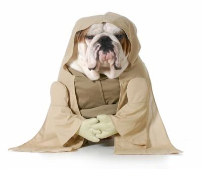 ヨーダの格好をした犬
