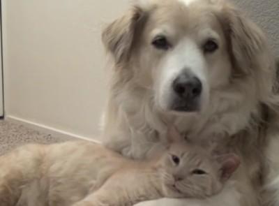 犬の足を枕にする猫
