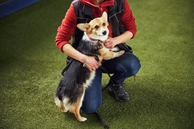 飼い主に助けを求めるような犬