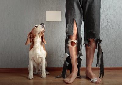 足を怪我している男性の隣に座って見上げる犬