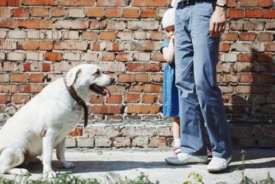 犬と大人に隠れる女の子