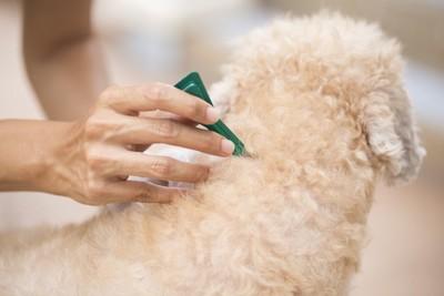 犬の首元に予防薬を投与する人の手
