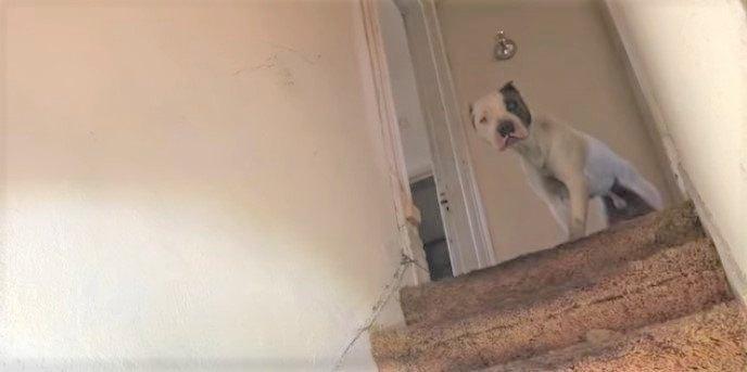 階段の上に現れた犬
